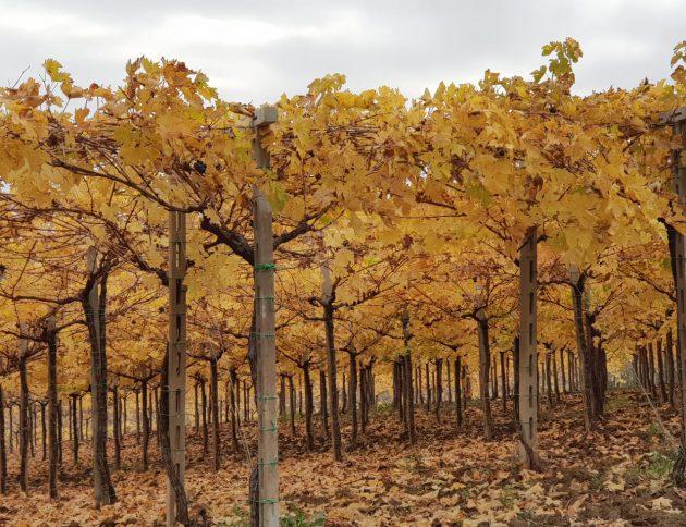 Vitigni-autunno
